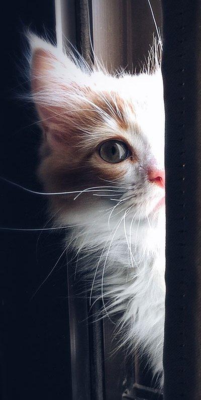 kittenPeeking-2